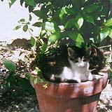 Regenwasserzisternen for Besondere topfpflanzen